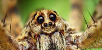 В древности это насекомое пользовалось большим почетом среди людей