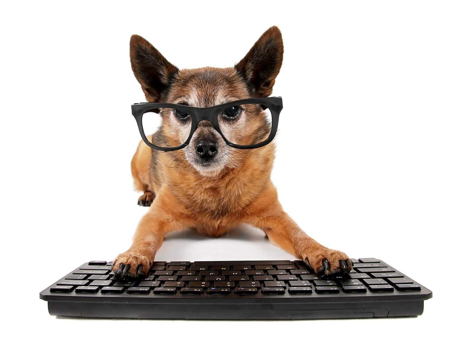 собака на клавиатуре