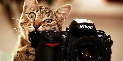 Возьмите на вооружение несколько полезных лайфхаков для успешной фотосесии
