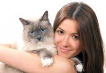 Правда ли, что коты могут лечить болезни?