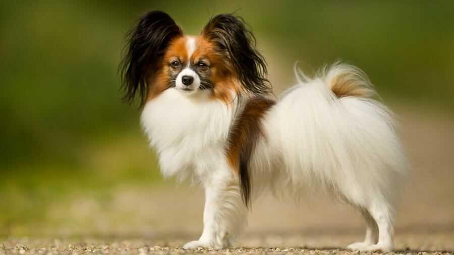 Самые агрессивные собаки в мире